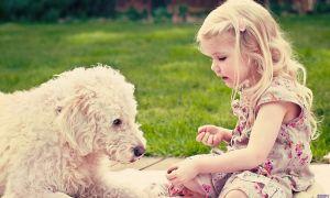 Аллергия на животных у ребенка