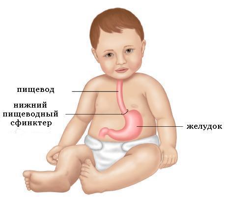 Ребенок и его пищеварительная система