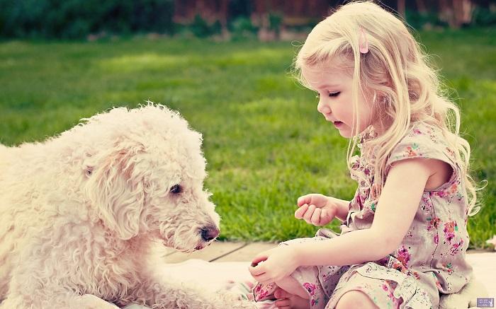 Собака может вызвать аллергию