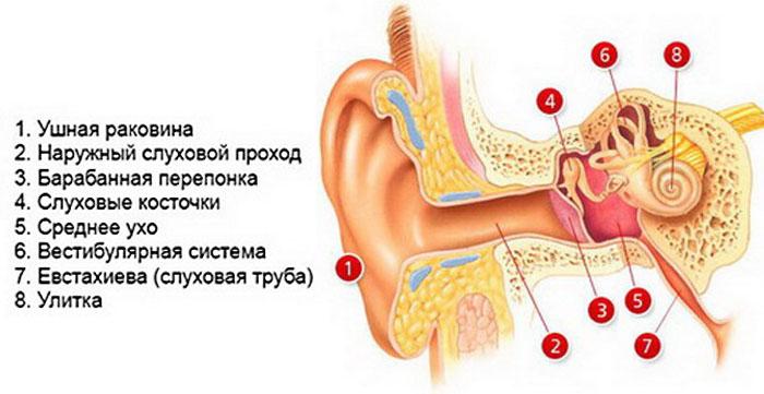 Ушное строение