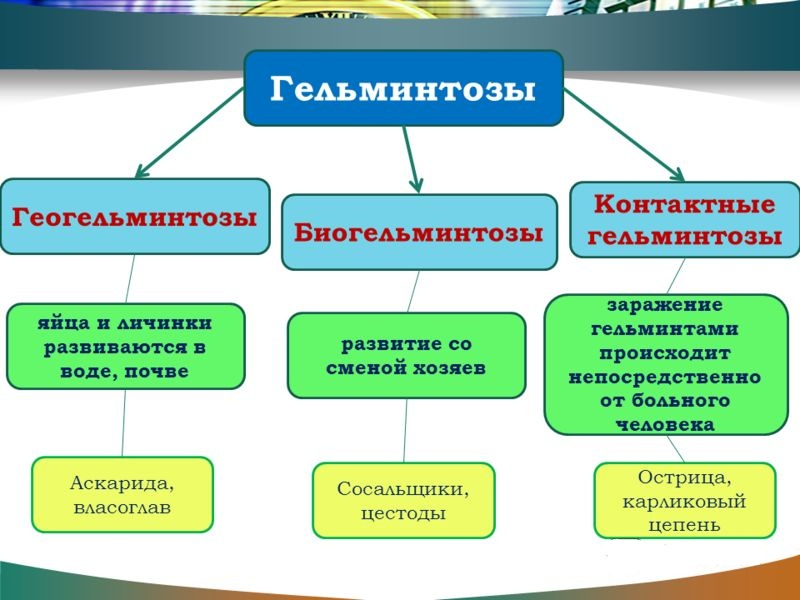 Классификация гельминтозов