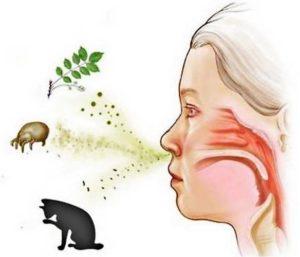 источники аллергии у ребенка