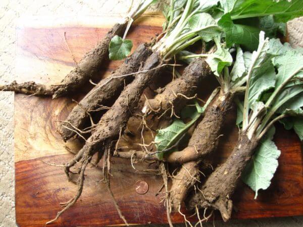 Отвар из корней лопуха выведет ртуть из организма