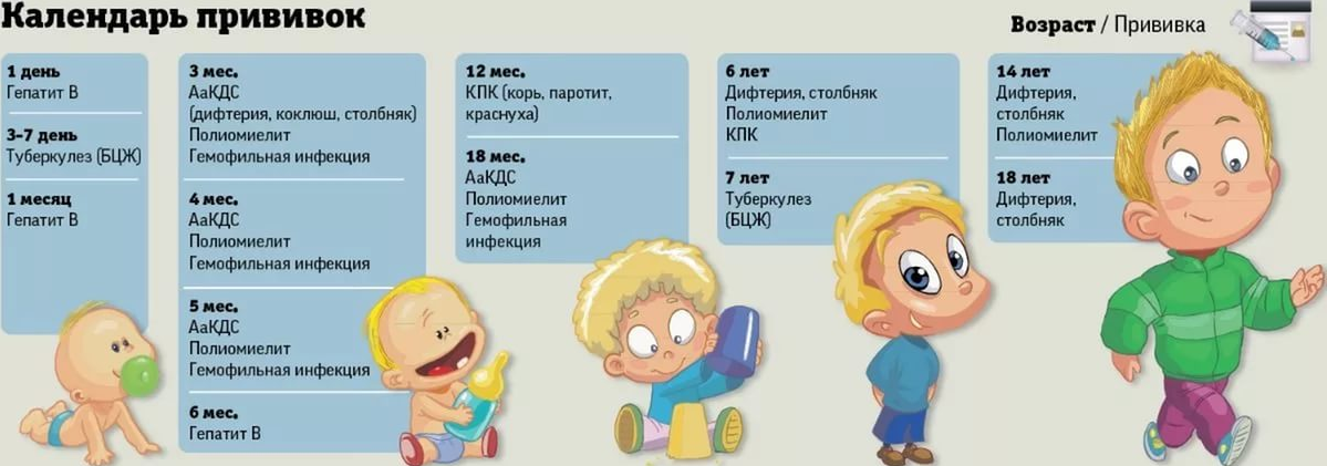 календарь прививок для всех возрастов