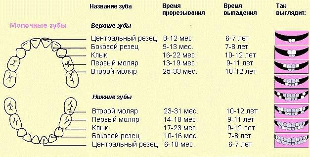 Схема зубов подростка