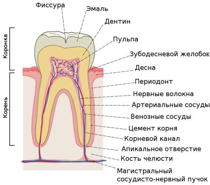 Коренной зуб с нервом как удалить